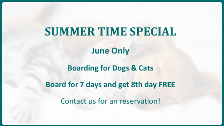 summerOffer2-puppy_kitty_bg